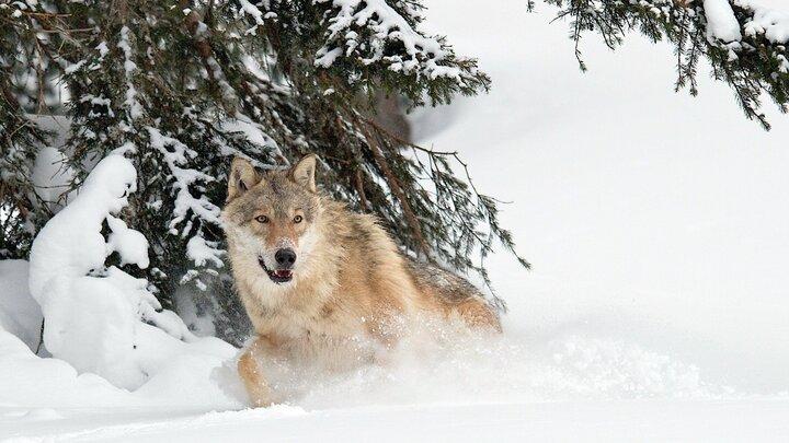 Alpernas djurliv