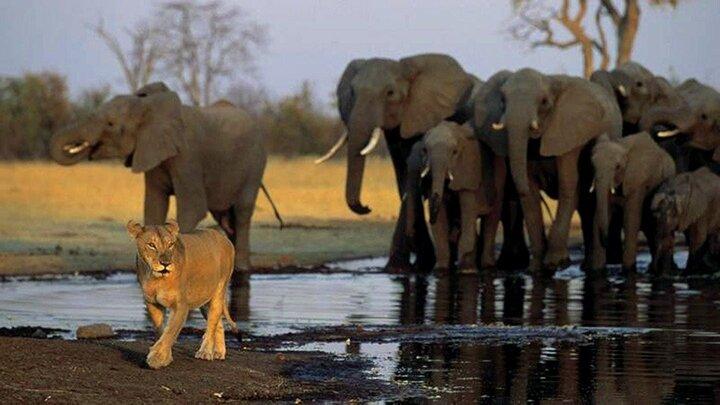 Lejon och jättar