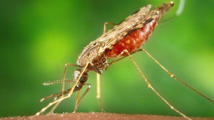 Sanningar om mygg
