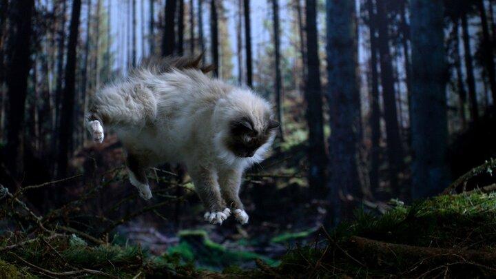 Katternas vilda liv