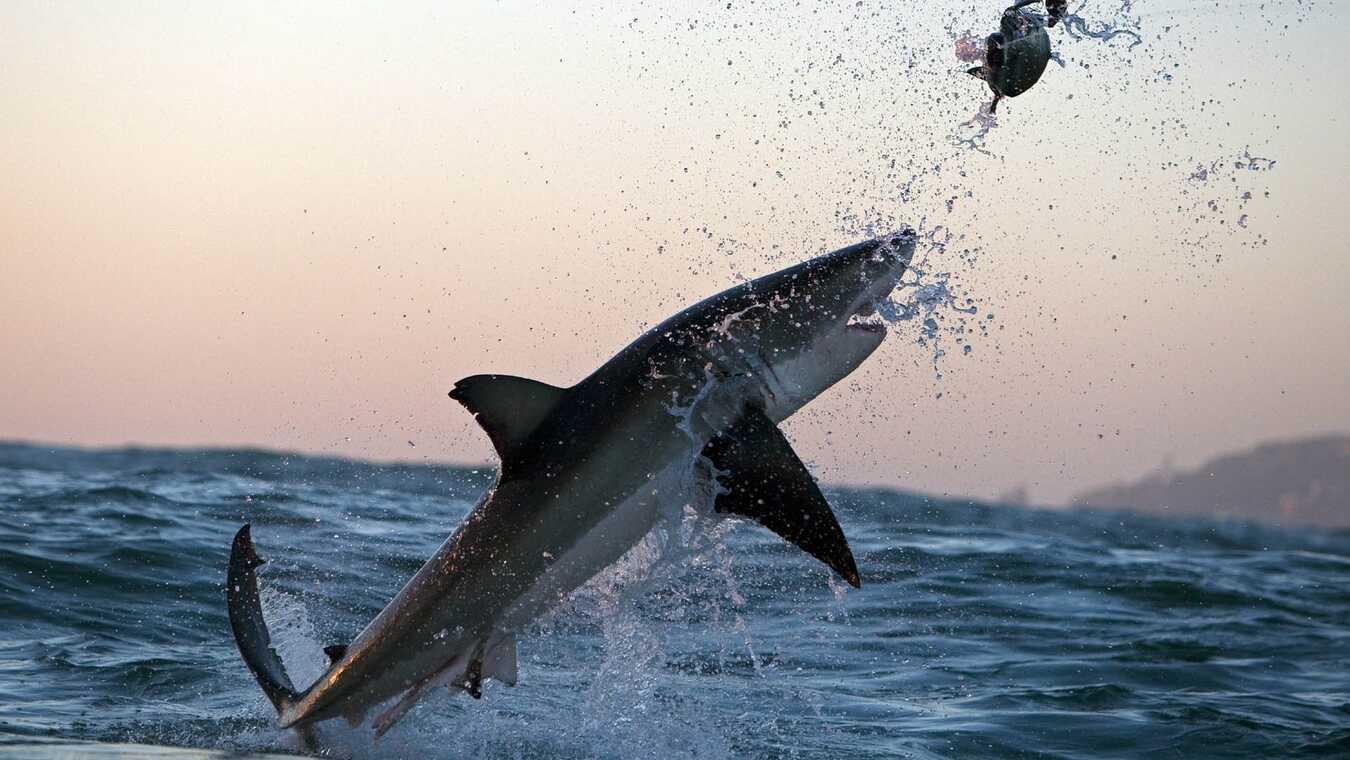 Hajar i luften 2