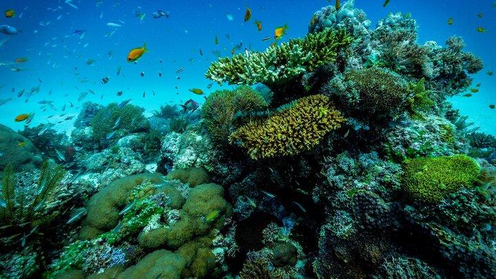 Mattias Klums hotade koraller
