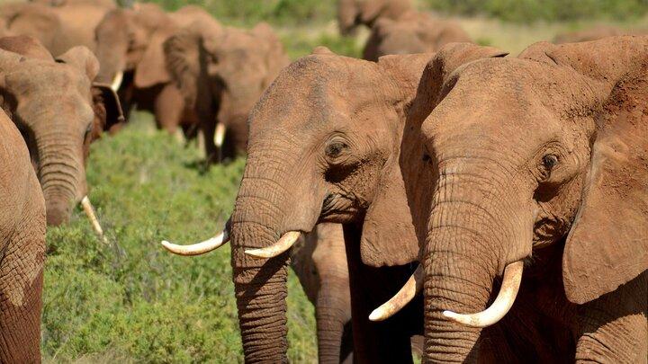 Världens natur: Djurens mäktiga vandringar