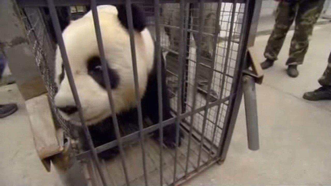 Jordbävning: Rädda pandorna