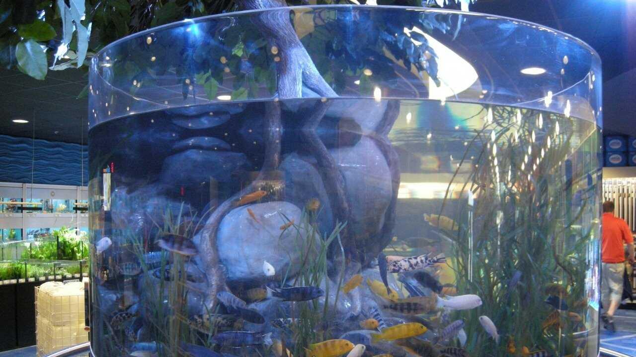 Akvariekungarna