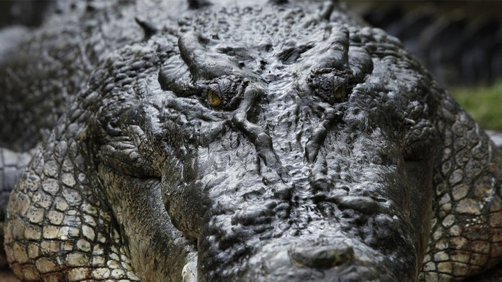Biggest & Baddest