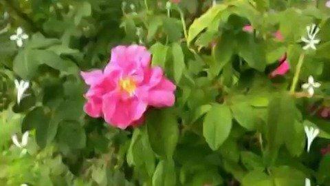 Från blomma till blomma - meänkieli