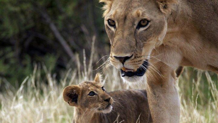 Vårt vilda liv - familjeäventyr i Kenya