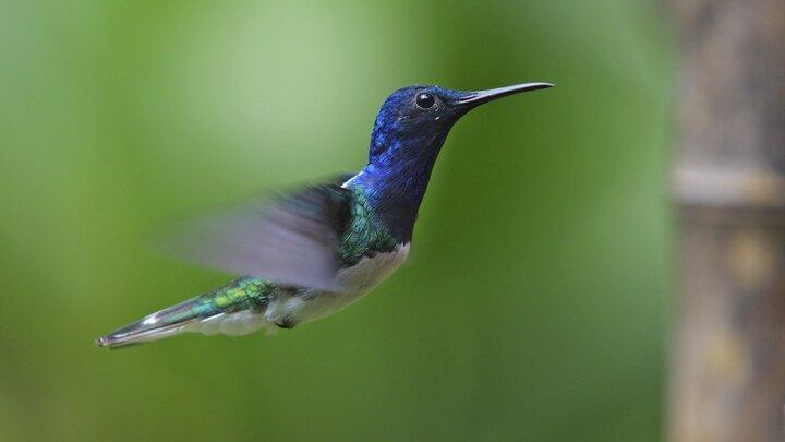 Kolibriernas liv