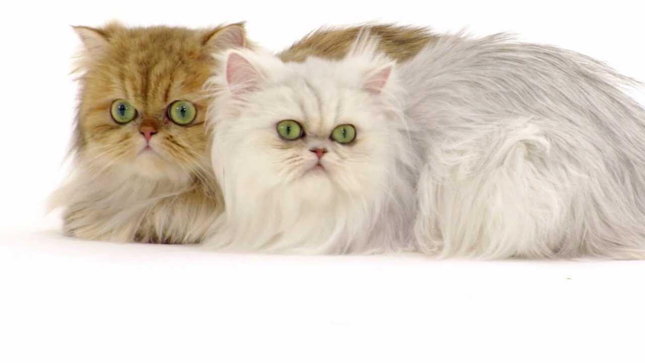 Allt om katter