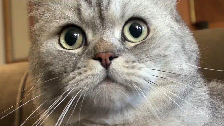 English Kitties and Stowaway Cats