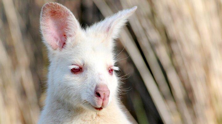 Tasmanien - landet Annorlunda