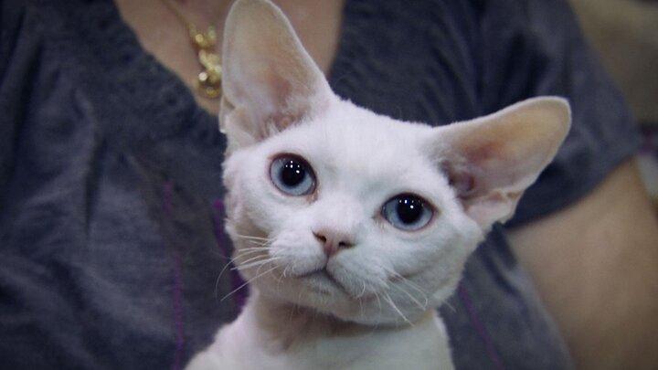 Kattens vilda historia