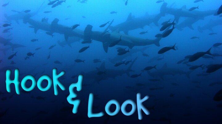 Hook & Look