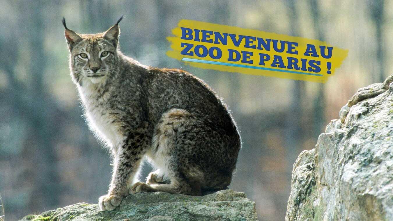 Bienvenue au Zoo de Paris !
