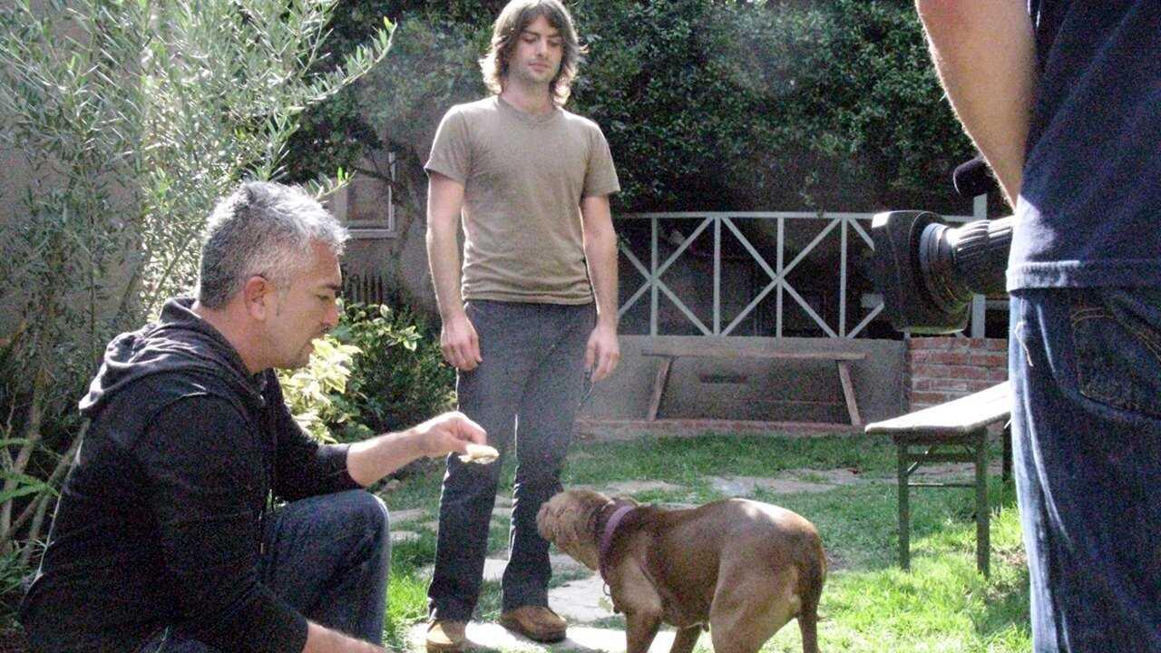 Mannen som talar med hundar