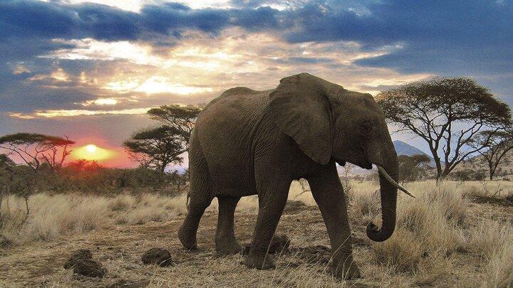 Fantastiska Serengeti