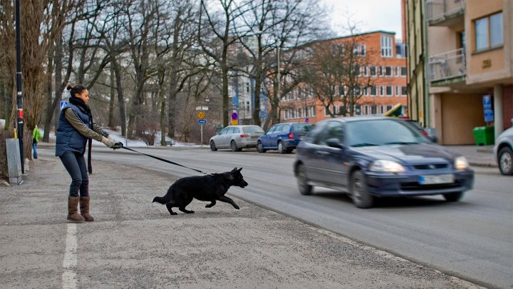 Hundcoachen