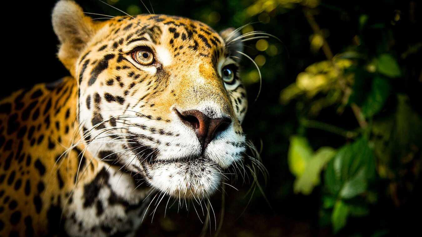 Världens natur: Katternas planet