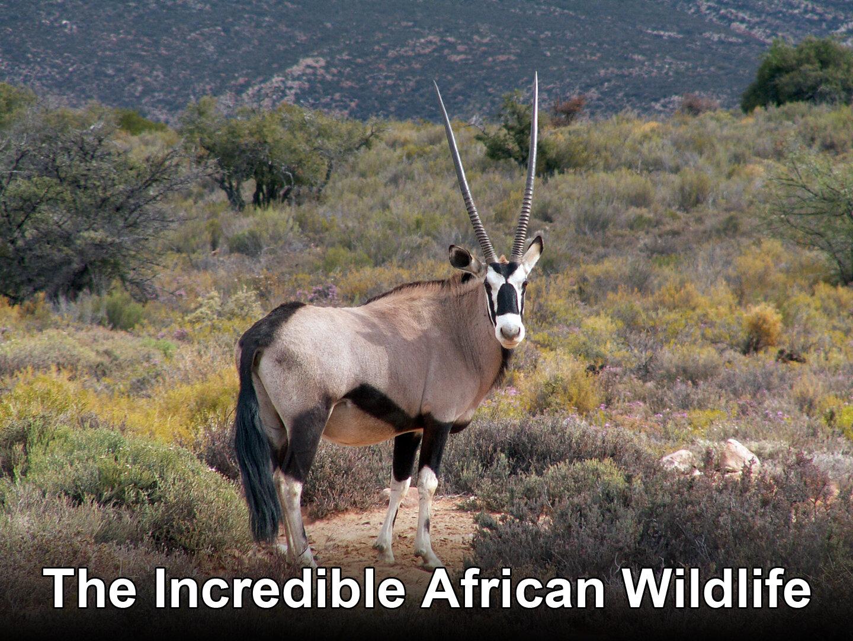 Afrikas otroliga djurliv