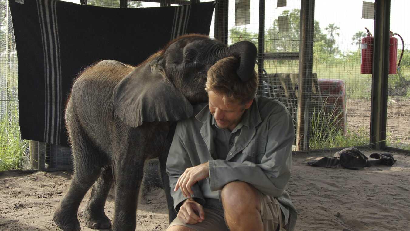 Den lilla elefantens kamp
