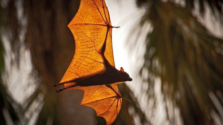 Världens natur: Monsunen
