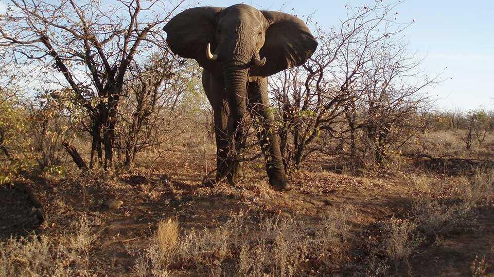Afrika - Från tjuvjakt till safari