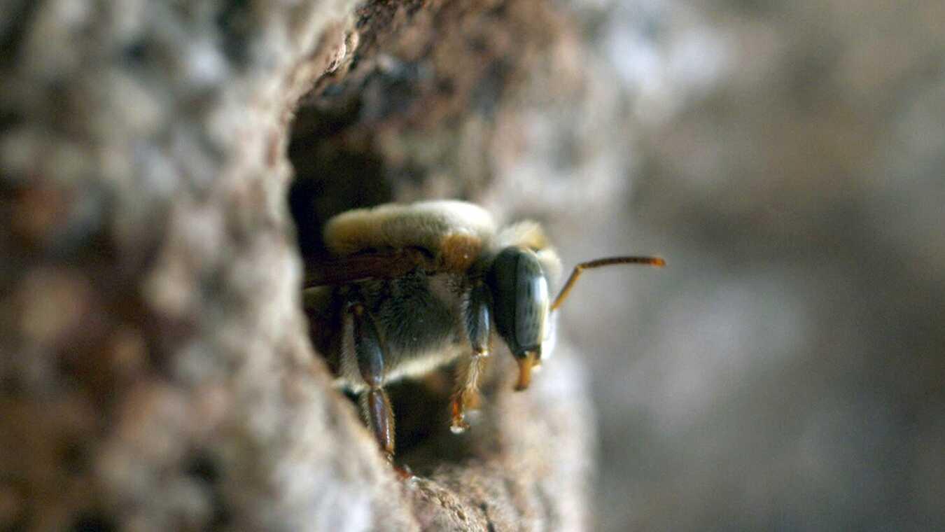 Våra älskade bin