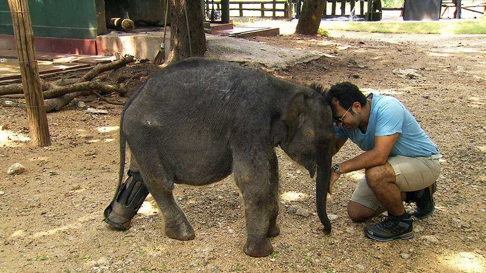 Adnan unter wilden Tieren