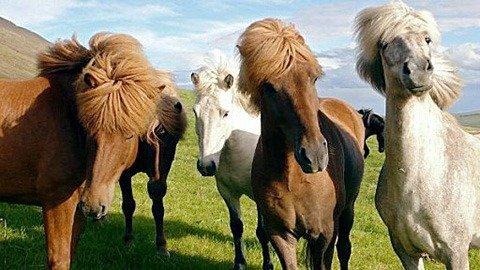 Im Bann der Pferde