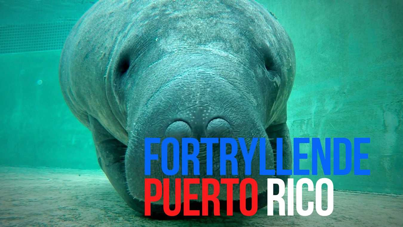 Fortryllende Puerto Rico