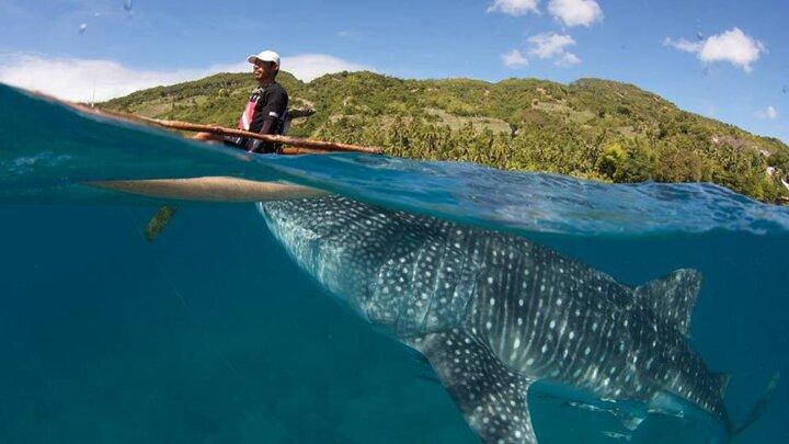 Giganten des Glücks - Das Walhai-Wunder von Oslob