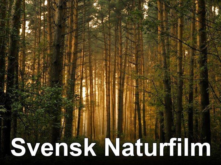 Svensk Naturfilm