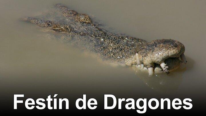 Krokodilfrossa
