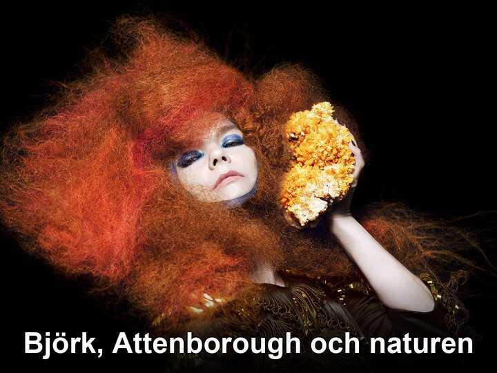 Björk, Attenborough och naturen